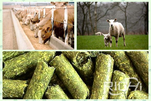 How about straw pellets? Why do cattle and sheep love to eat