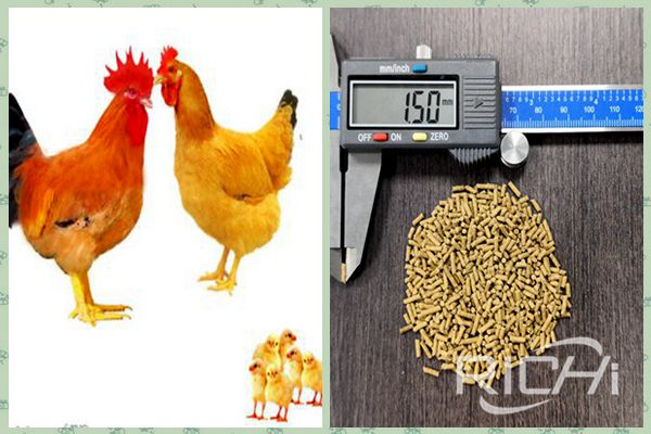 Initial investment in chicken feed production line