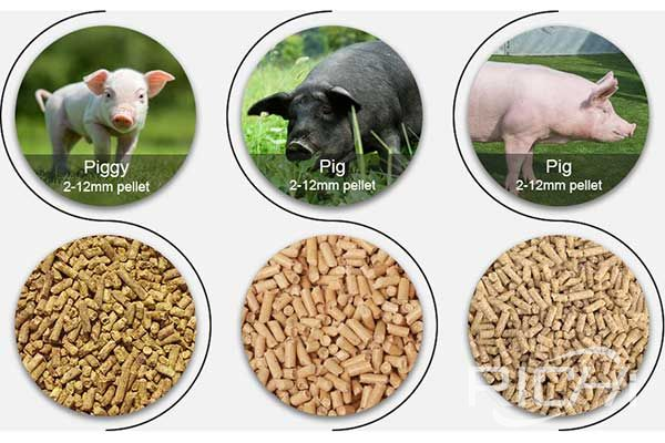 Optimum particle size of pig feed pellets