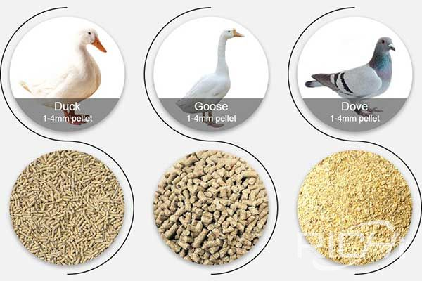 Why do rabbit, pigeon, duck, and goose feed pelletize