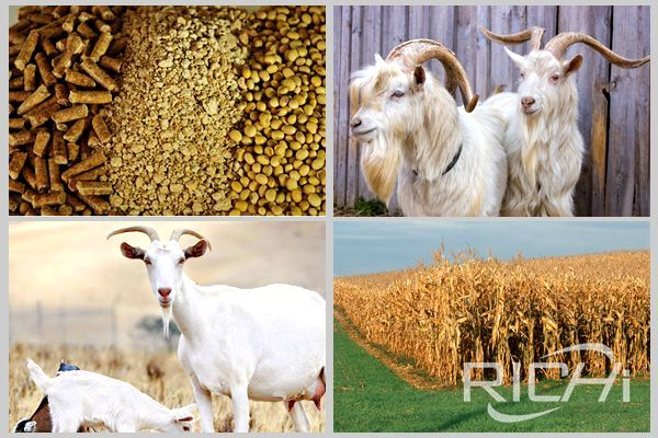 Sheep feed pellet machine production of feed,How much a goat can eat in a day?