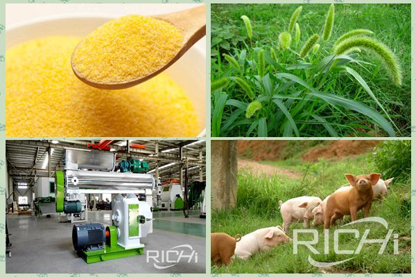 Benefit analysis of animal feed pellet machine for upstream and downstream enterprises