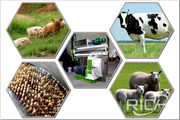How to choose a suitable pig  cattle and sheep feed pellet machine?