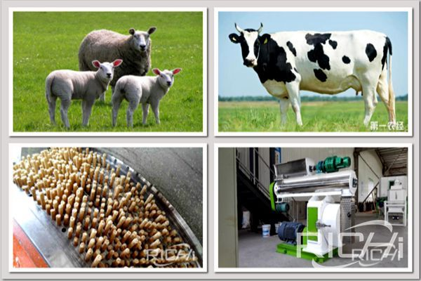 Broiler and cow feed pellet machines for sale