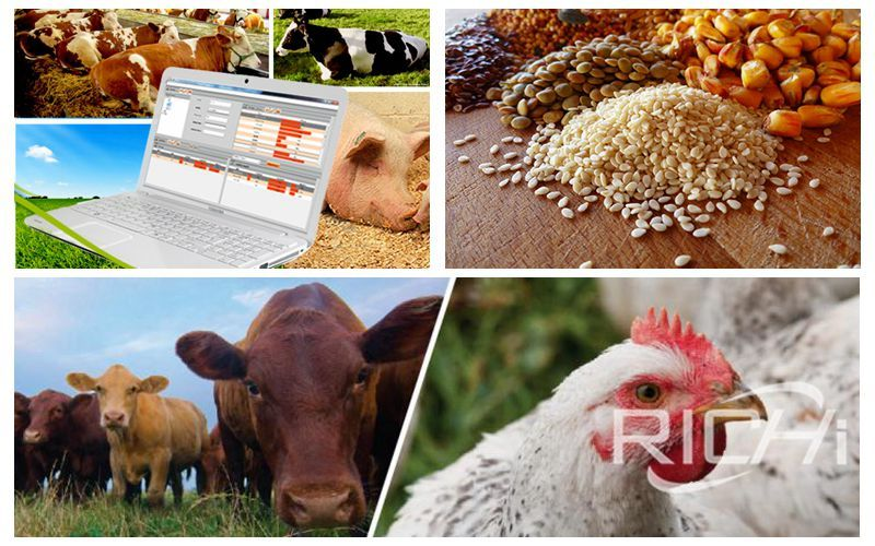 What are the factors affecting the durability of pellet feed