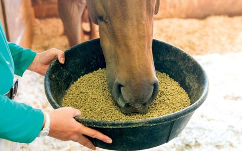 How to Make Horse Feed Pellets