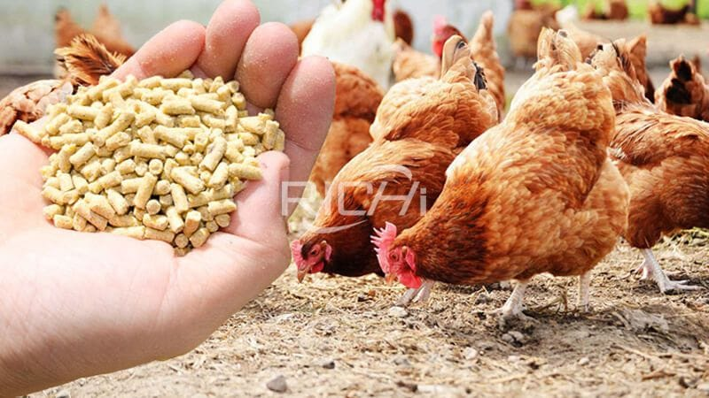 chicken and feed pellet